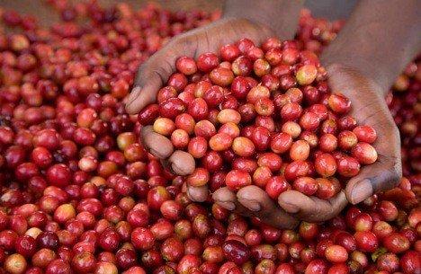 Uganda farmed coffee tops the menu for Llandrindod Fairtrade group