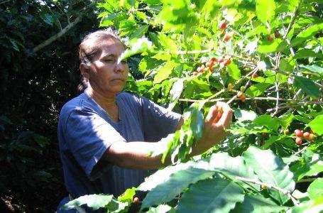 Earth's Choice Women of Coffee Micro Finance