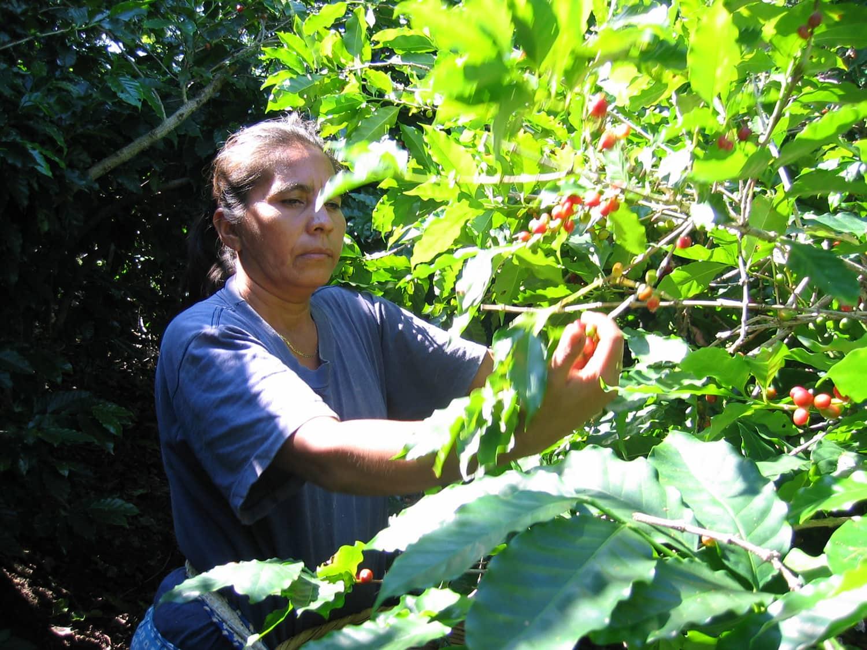 AMCES woman producer