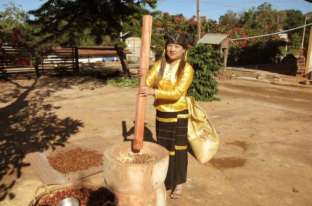 Myanmar And Specialty Coffee: Critical Crossroads