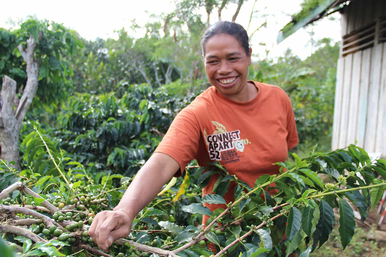 Lutheran World Woman with Coffee IV - Keeping Up in a Competitive Global Market  Means Better Life for Coffee Farmers in Indonesia