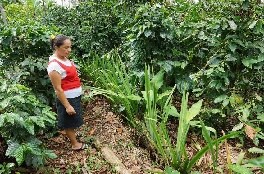 Maria shows her anti erosion planting copy