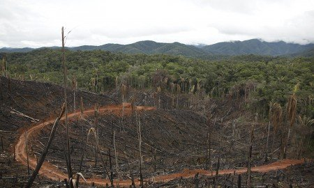ecotierra   deforestation