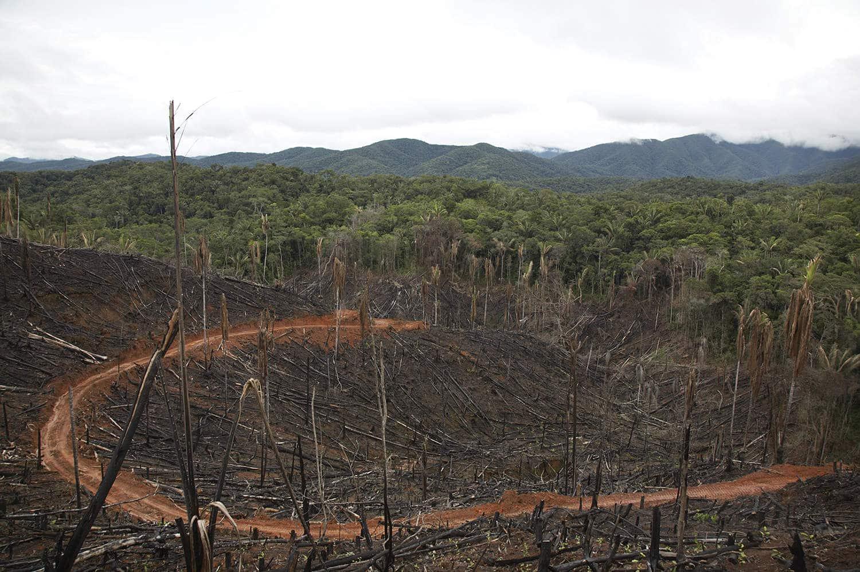 ecotierra   deforestation