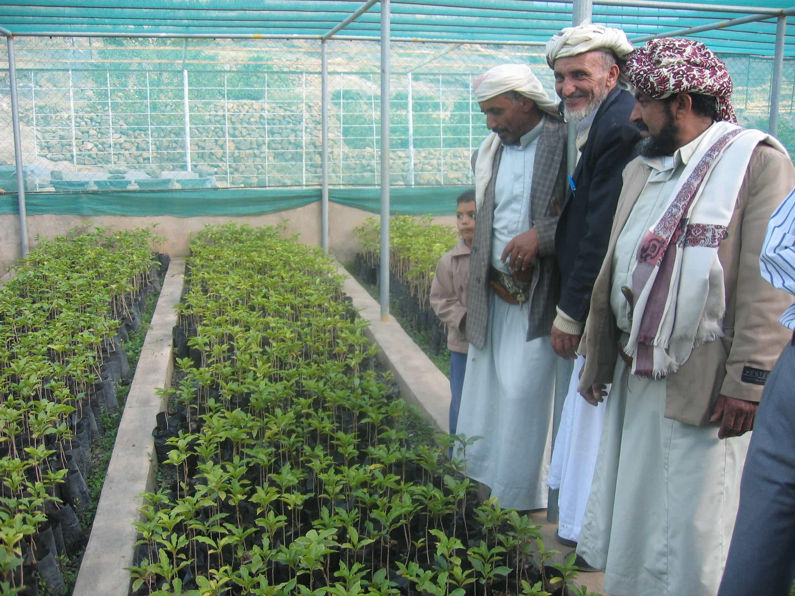 Yemen 2006 212