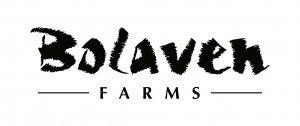Bolaven Farms