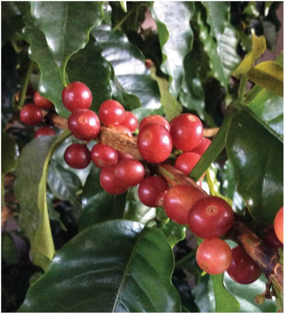 NW3 931x1024 - New World Coffee