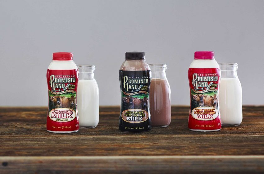 Bethany Bell   Borden  Promised Land Milk