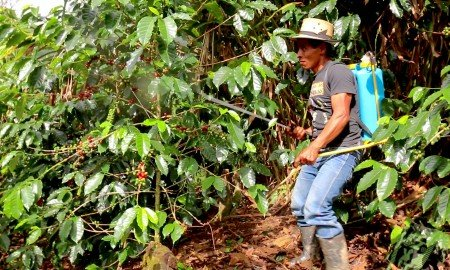 What the Future for Coffee Could Be