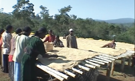 screen 3 450x270 - Coffee Farmers Continue To Struggle With Price Crisis Despite High Demand: What Are Starbucks And Others Expecting?