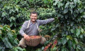 Bernard Gauvin - Producer in the field