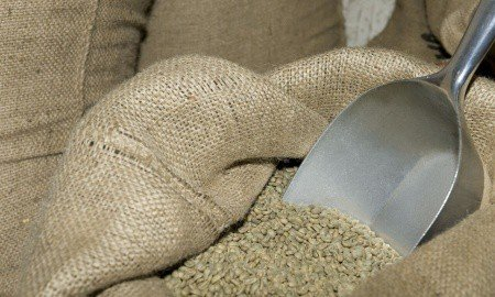 bag and scoop 450x270 - YGYI's CLR Roasters Ships First 3.8 Million Pounds of Green Coffee ...
