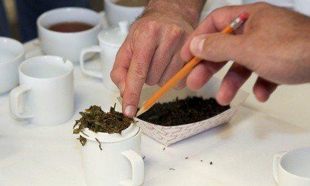 Aaron Kiel Tea Championship 4 crop 450x270 - Penton Re-Brands and Enhances the 'North American Tea Championship' as the 'Global Tea Championship'