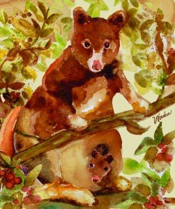 wendra-lynne-coffee-tree-kangaroo