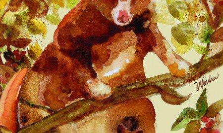 wendra-lynne-coffee-tree-kangaroo