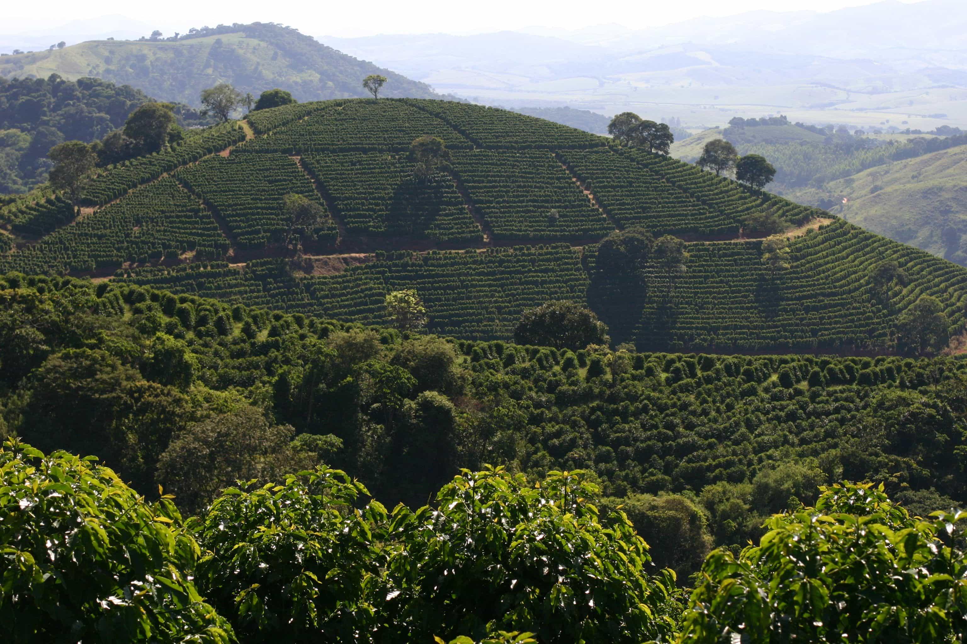 Manisha Desai The Nobletree Farm - Nobletree Coffee Opens First Shop