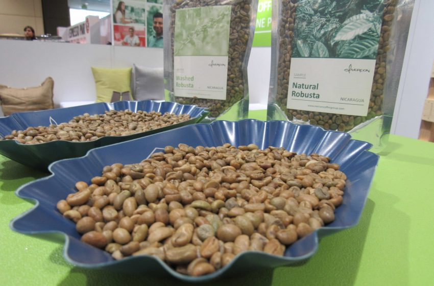 New Arabica Genetic Group, Yemenia, Sees First International Auction
