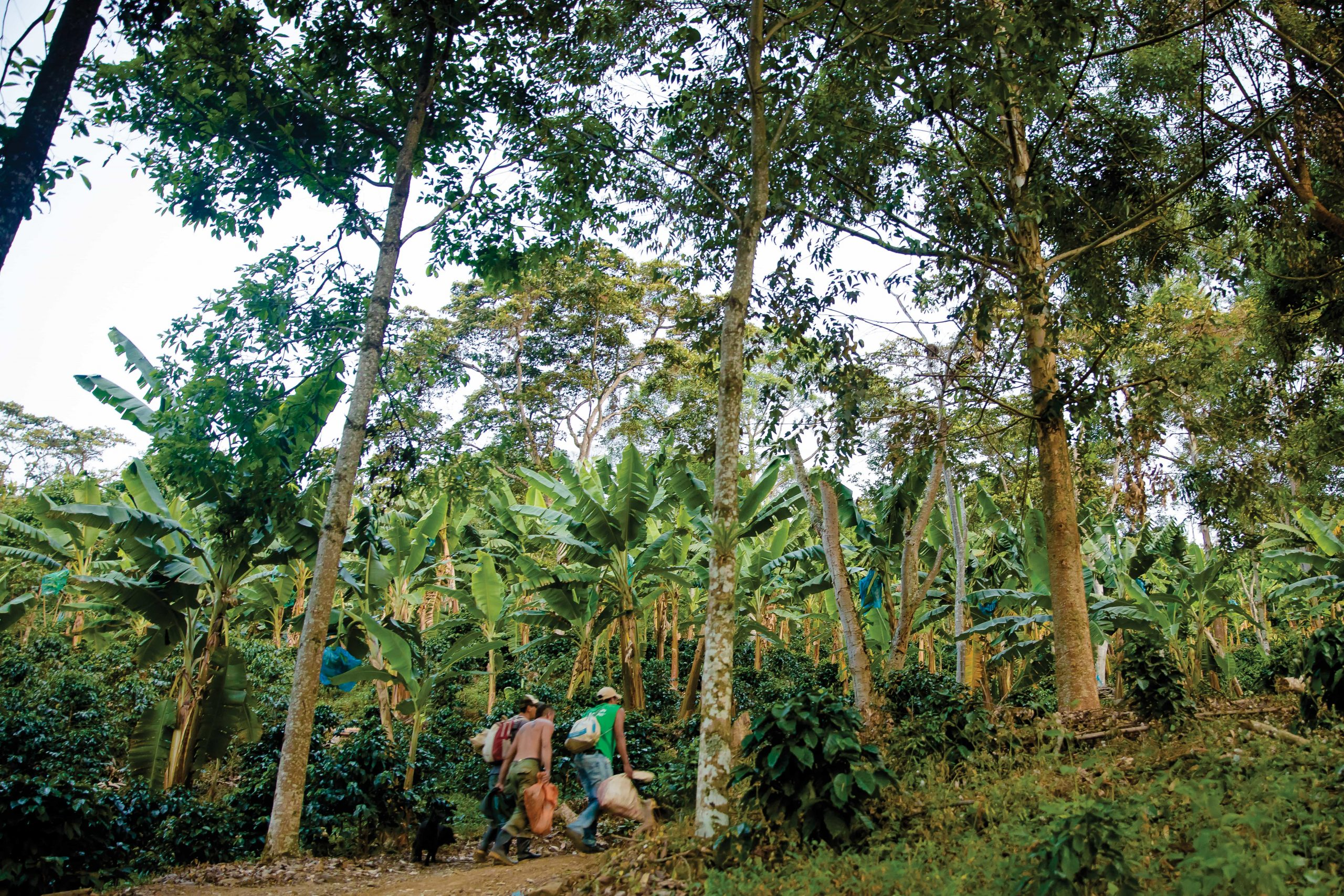 Colombian coffee exports in May drop 52% from May 2020 due to roadblocks and protests