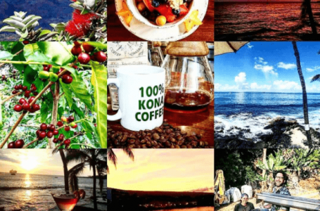 Daylight Mind Coffee Company announces all-Hawaiian signature drink contest
