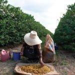 1040189 150x150 - CoffeeTalk in Brazil