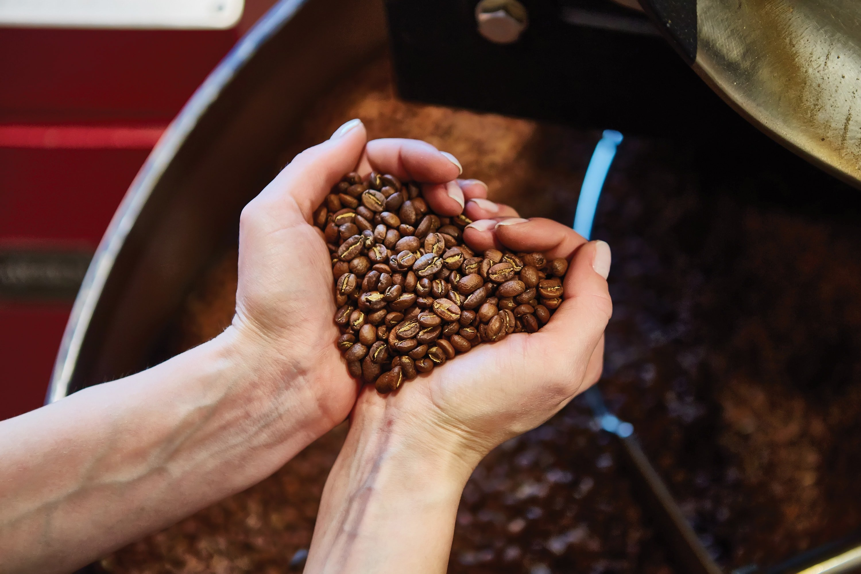 coffee roaster beans and hands - Roasters Rock - Roasters Guild Retreat: Then and Now