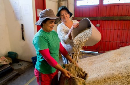 Volcafe promotes female coffee farmers