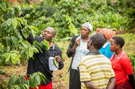 Uganda coffee exports down 5% y/y in January – regulator