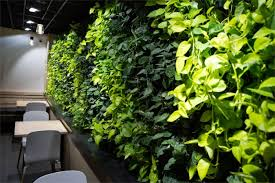David Aquilina Acheff Images LWall Coava Coffee 1 - LiveWall Indoor Living Wall Livens Up Coava Coffee's New Café