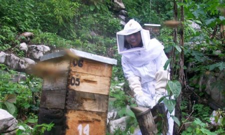 unnamed 450x270 - Celebrating the Honey Harvest in Ixil