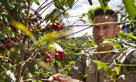 20180518 170837 450x270 - illy Will Purchase Colombian Coffee Grown by Former Guerrilla Fighters