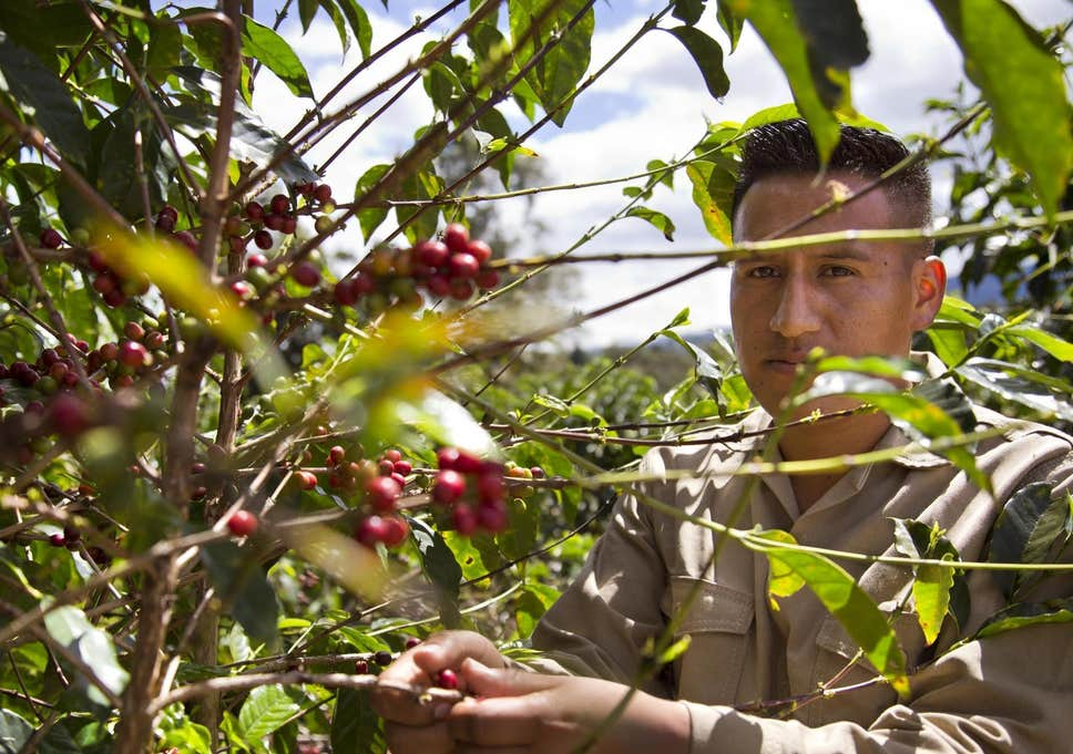 20180518 170837 - illy Will Purchase Colombian Coffee Grown by Former Guerrilla Fighters