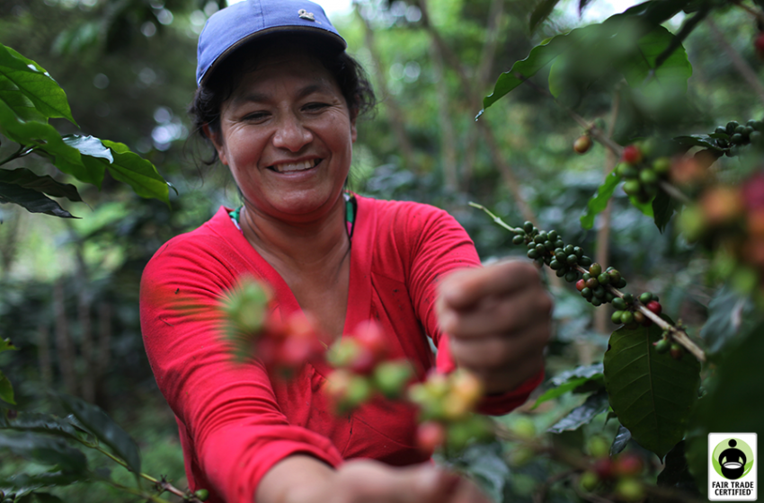 Homegrown Kedah coffee beans for classic beverage