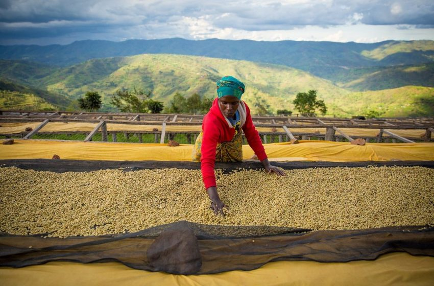 How Coffee And Sewing Machines Are Making A Difference To Women Coffee Farmers' Lives In Uganda