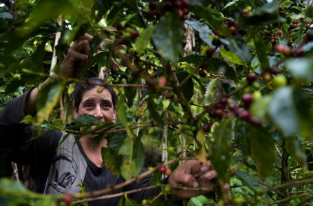 Colombia looks to maintain coffee output in 2021, federation says