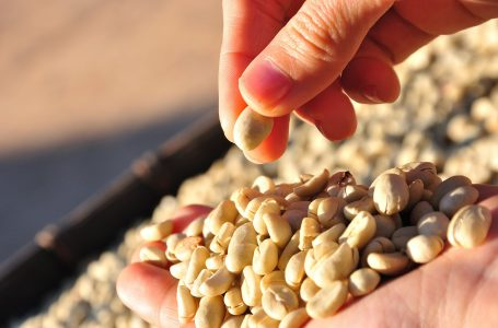 Smallholder Coffee Farmers Fight Climate Change And Oversupply