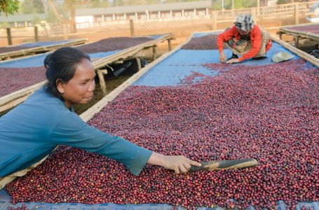Paying Farmers A Living Wage Is Essential To Ensuring Sustainable Coffee Production