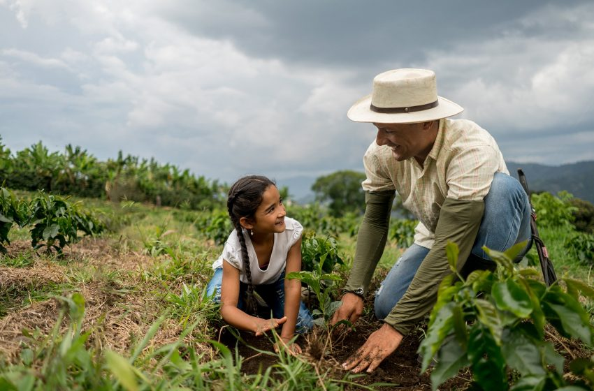From 'coffee farm-to-table' concept in Cebu
