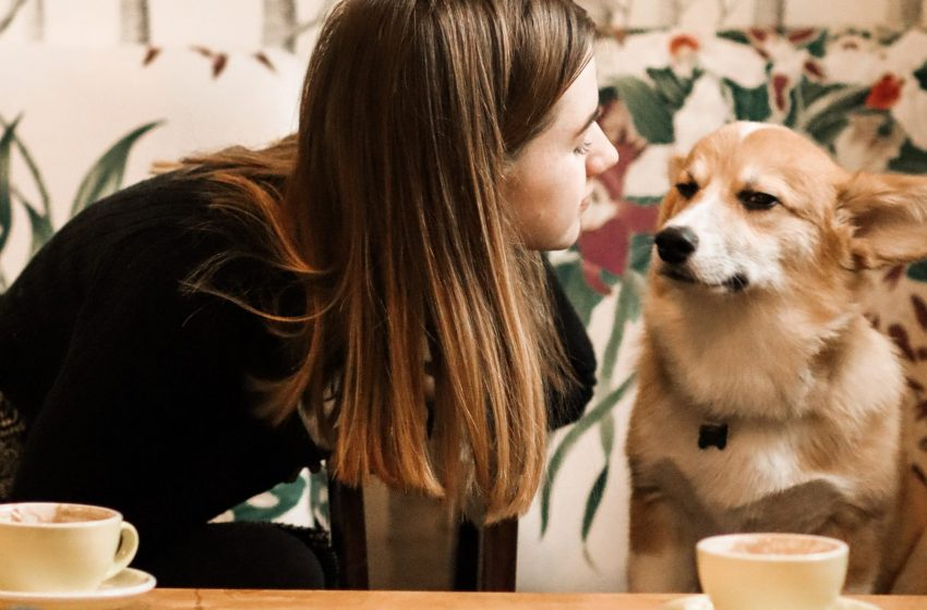 New Zealand's first adoptable dog cafe hits $50,000 startup goal