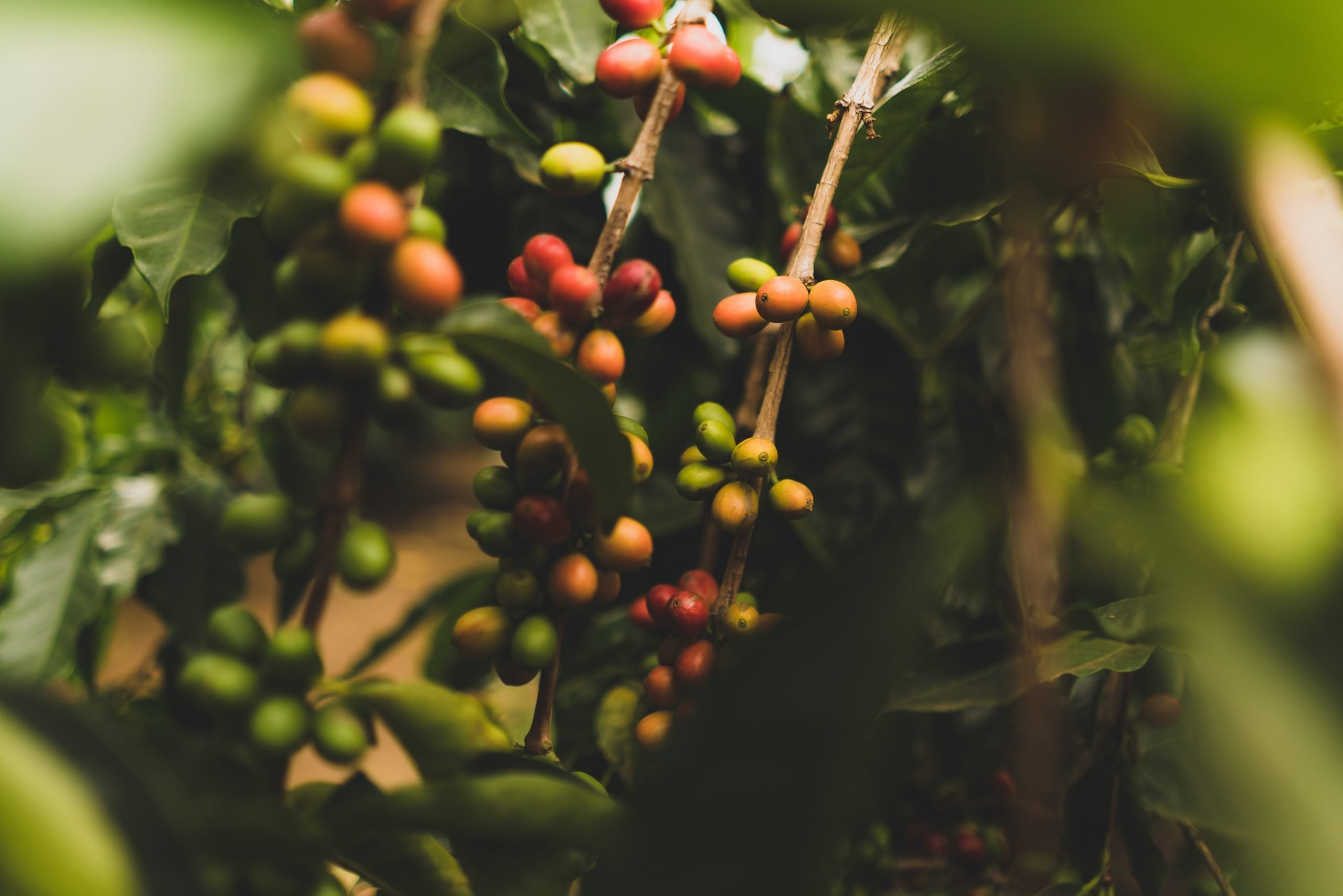 What The Shade-Grown Label Means on Your Coffee