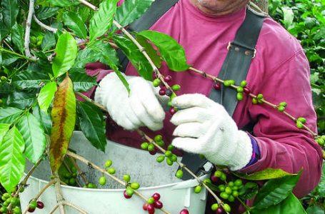 Kona coffee labeling settlements top $13M