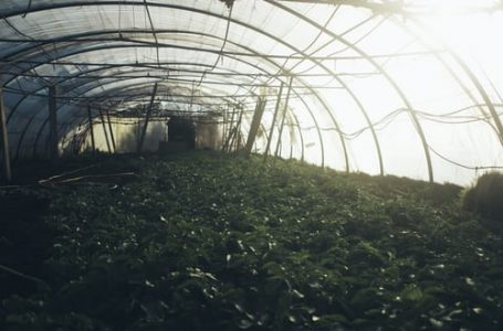 S. Korean Scholar Succeeds in Cultivating Coffee Trees in Unheated Greenhouse