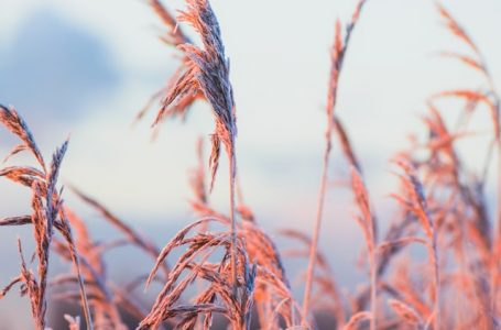 Frosts reported in Brazil's sugarcane, coffee and corn areas