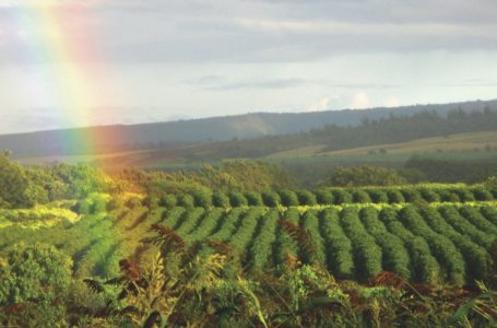 Sustainable coffee: inside and out