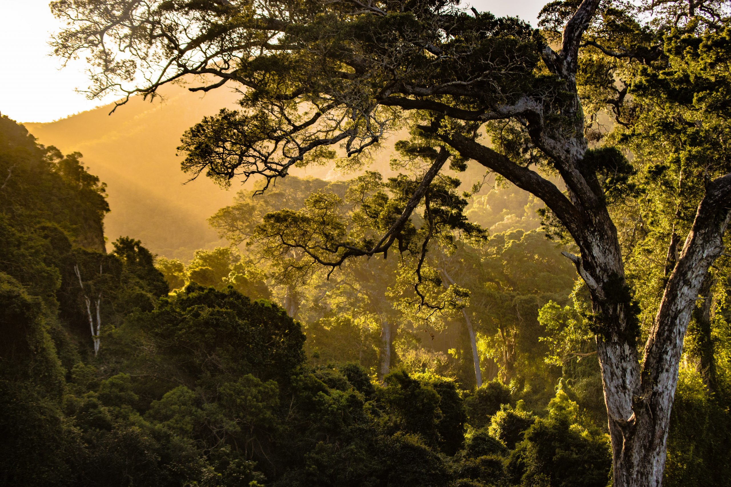The Last Wild Coffee Forests